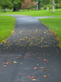Autumn path. In the park royalty free stock images