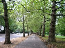 Autumn path. Path with trees on the sides in autumn Stock Images