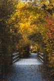 Autumn Path royaltyfri foto
