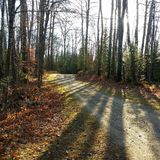 Autumn Path image stock