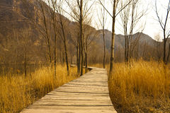 Autumn path. Yellow autumn leaves litter paraquat in the mountains at the foot of the winding path Stock Photography