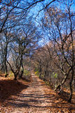 Autumn path. Path through a forest with fallen autumn leaves Stock Image
