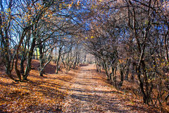 Autumn path. Path through a forest with fallen autumn leaves Royalty Free Stock Photo