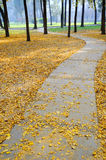 Autumn path. In the park royalty free stock photography