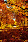 Autumn path. A colorful mountain path colored by autumn season Stock Photography