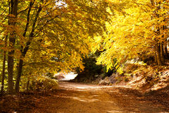 Autumn path. A colorful autumn path in the mountain of paggaio in Greece Stock Images