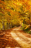 Autumn path. A colorful autumn path in the mountain of paggaio in Greece Stock Photo