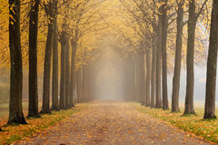 Autumn path. Hazy day in an old garden with a path between trees Royalty Free Stock Image