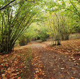 Autumn path. Path in the woods of Sardinia Royalty Free Stock Photos