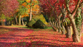 Autumn path. Beautiful autumn path full of red leaves in a park Stock Images