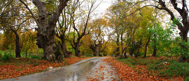 Autumn path Royalty Free Stock Images