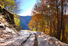 Autumn path. Autumn snow has transformed this picturesque forest path stock photos
