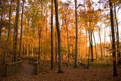 Autumn Path. Through a park forest Stock Photography