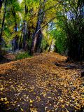 Autumn Path. Park path covered with autumn leaves Royalty Free Stock Photo