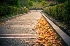 Autumn path Royalty Free Stock Image