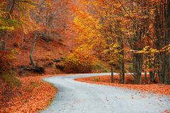 Autumn path. A colorful autumn path in the forest Stock Photos