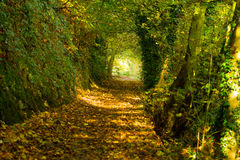Autumn path 3 Royalty Free Stock Photos