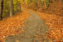 Autumn Path. In a forest with fallen leaves Stock Photo