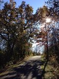 Autumn Path immagine stock libera da diritti