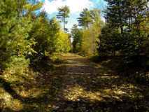 Autumn Path Images stock