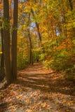 Autumn Path Royalty-vrije Stock Afbeeldingen