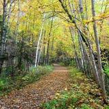 Autumn Path Fotografie Stock Libere da Diritti