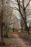 Autumn Path Arkivfoton