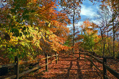 Autumn Path. View of park trail in autumn on a bright sunny day royalty free stock image