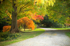 Autumn Path Lizenzfreie Stockfotografie