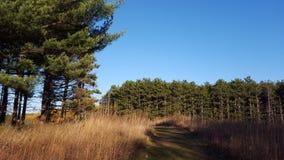 Autumn Path Immagini Stock