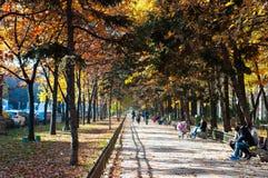 Autumn Path imágenes de archivo libres de regalías