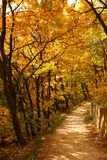 Autumn path. Path for the walk in the autumnal forest Stock Photo