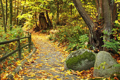 Autumn path. Forest path in Stanley Park, Vancouver BC covered with autumn leaves royalty free stock photography