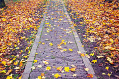Autumn Path Imagem de Stock Royalty Free