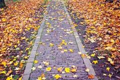Autumn Path Imagem de Stock Royalty Free