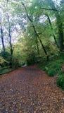 Autumn Path Lizenzfreie Stockfotos