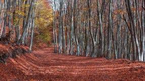 Autumn Path Fotografía de archivo libre de regalías