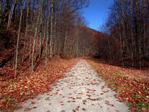 Autumn Path. Colorful path in the country - autumn Stock Photo