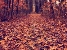 autumn path across the wood, vintage Stock Photo