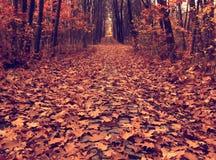 Autumn path across the wood, vintage. Autumn picture of fallen leaves on a path across the wood, vintage colored Stock Photo
