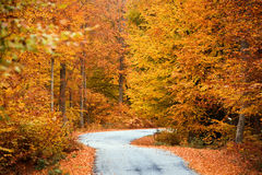 Autumn path across the woods Stock Photography