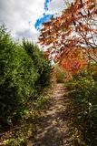 Autumn path along green bushes Royalty Free Stock Images