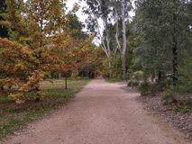 Autumn path in Castlemaine stock images