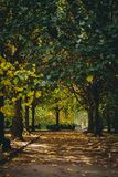 Autumn path in a city park. royalty free stock photography