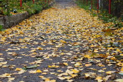 Autumn path Stock Images