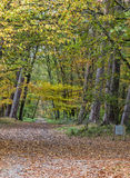 Autumn Path. Covered in fallen leaves in a hardwood forest located in Fotnainebleau Forest in Central France Stock Photography