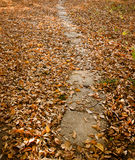 Autumn Path Stock Image
