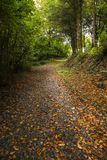 Autumn path. Path with fallen leaves on the ground Royalty Free Stock Photo