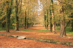 Autumn path through a forest. In grounds Fontainebleau chateau ( castle Stock Image