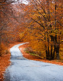 Autumn path through the forest Stock Photography